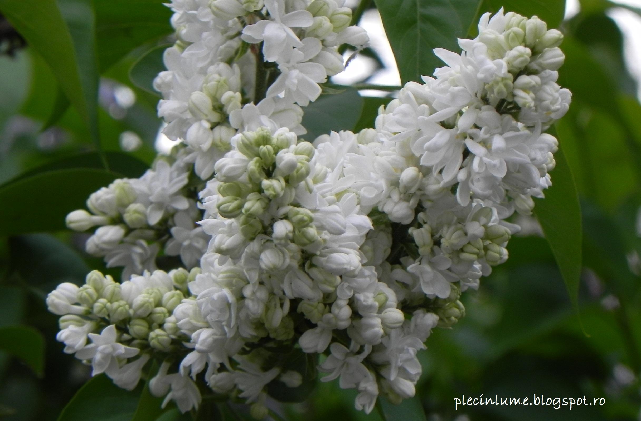 rezervatii naturale de flori