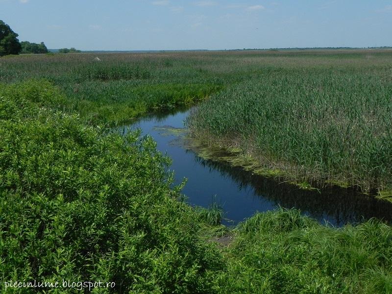 Delta Neajlovului si padurea Comana