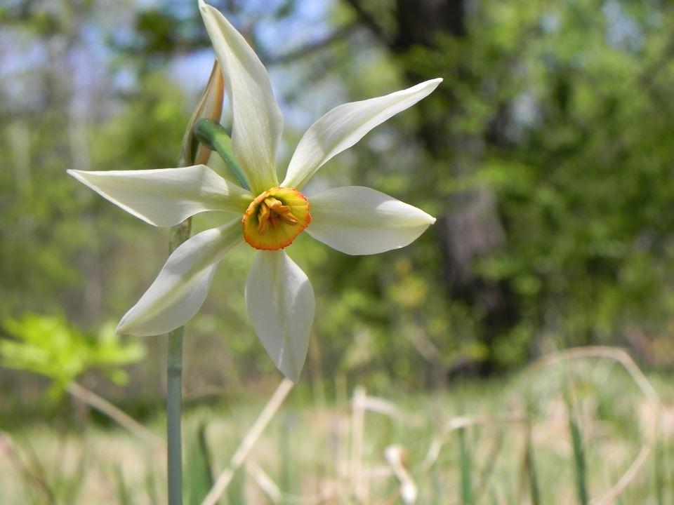 Narcise Sercaia